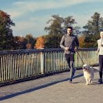 Injury Prevention for Your Canine Companion